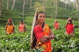 Na svetskom tržištu čaj je najprodavanije piće