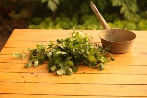 Korijander ima odlično dejstvo kao dodatak jelima.