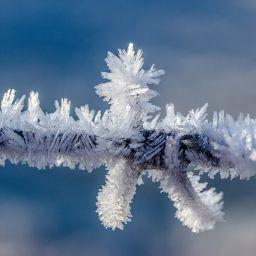 Kristali leda na drvcetu