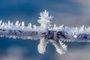 Ice cristals on the wood