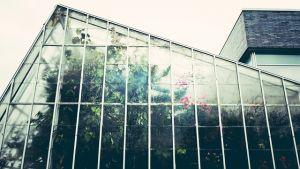 Staklenik sa biljkama