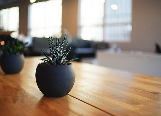 Saksija sa cvećem na stolu u kancelariji jer sobne biljke čuvaju zdravlje i zaposlenih u kancelarijama