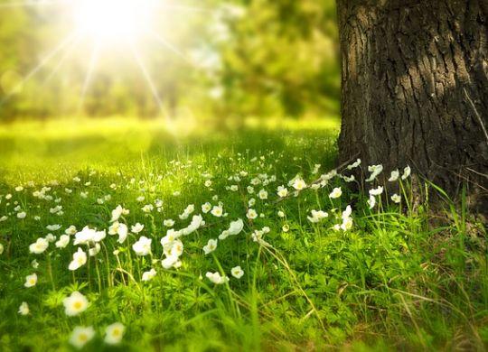 Priroda u proleće