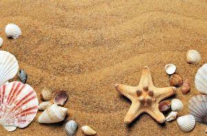 Pesak i morska zvezda
