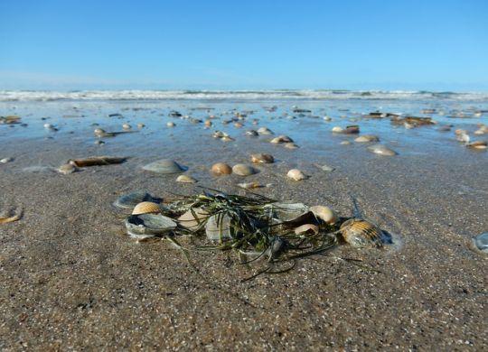 Morske školjke su najbolji način da se konzumira jod u ishrani