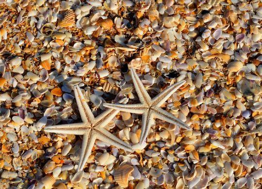 Morske zvezde, kao i morska so, dolaze iz mora